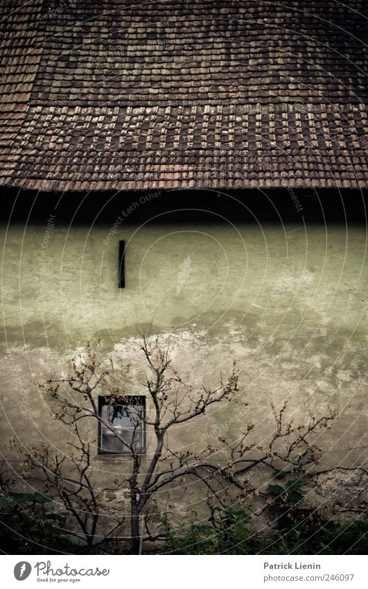 Blackened Old Tree Loneliness House (Residential Structure) Wall (building) Window Death Wall (barrier) Stone Building Moody Esthetic Uniqueness Roof