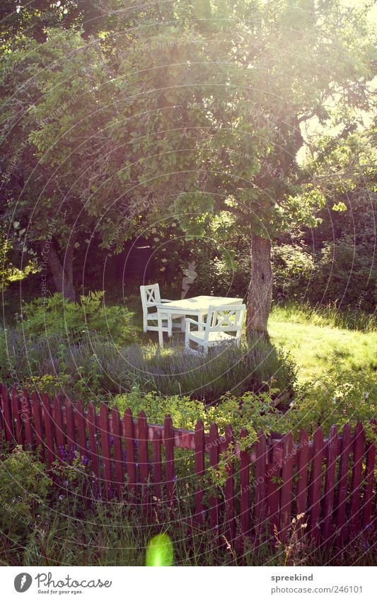 midsummer Relaxation Vacation & Travel Garden Meadow Sweden Dream Living or residing Moody Contentment Safety (feeling of) Nature Nostalgia Colour photo