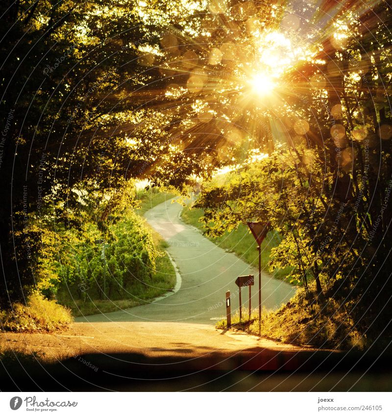 shadow biscuit Landscape Sun Sunlight Summer Beautiful weather Tree Agricultural crop Mountain Street Crossroads Road sign Bright Brown Yellow Green Calm Colour