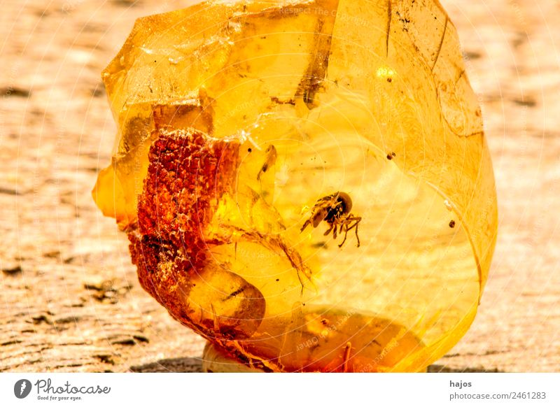 Amber with inclusion of a spider Nature Fashion Spider Old Yellow Inclusion Insect Close-up Macro (Extreme close-up) Baltic Resin Medication lithotherapy
