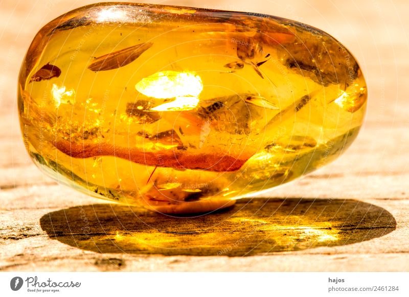 Amber with inclusions Nature Fashion Old Yellow Inclusion Precious stone luminescent sunny Brilliant Mystic Baltic Resin Sun Shadow Colour photo Exterior shot