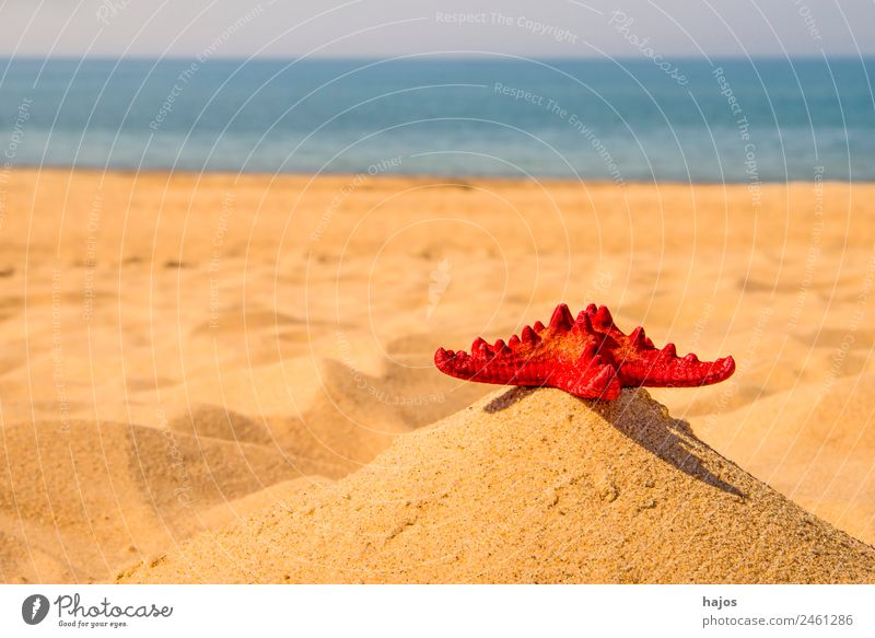 red starfish on the beach Vacation & Travel Summer Beach Sand Beautiful weather Baltic Sea Blue Yellow Red Starfish Sky Ocean Kü Water Travel photography