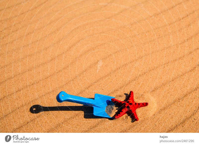Shovel and starfish on the beach Joy Relaxation Vacation & Travel Summer Beach Child Sand Yellow Tourism Toys Starfish Sandy beach Red Blue Playing play in sand