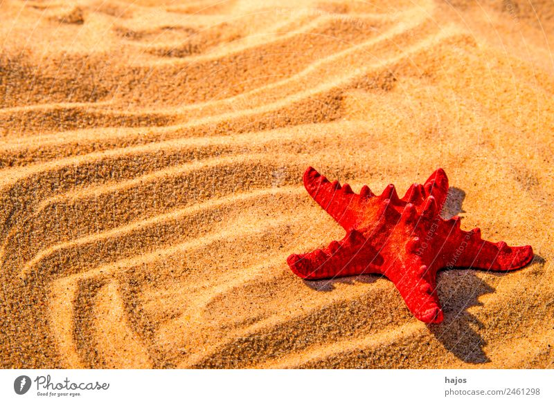 Starfish on a beach Vacation & Travel Summer Beach Sand Animal Tourism Red Maritime Sandy beach Line Summer vacation Tropical Sunbeam Travel photography