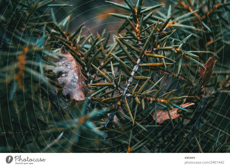 Abstract forms made with the leaves of a bush in the nature Design Beautiful Summer Garden Environment Nature Plant Autumn Leaf Park Dark Natural Wild Yellow