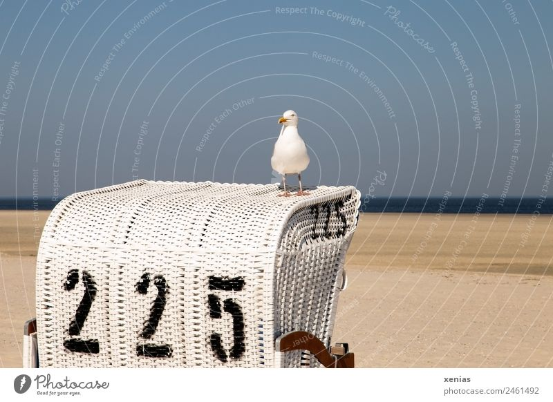 a seagull sits on beach chair number 225 in front of a blue sky Beach chair Seagull Vacation & Travel Summer Summer vacation Ocean Nature Landscape Sky