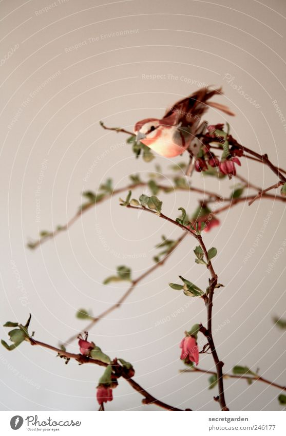 Nature White Plant Red Loneliness Animal Spring Small Art Brown Contentment Bird Flat (apartment) Esthetic Bushes Living or residing