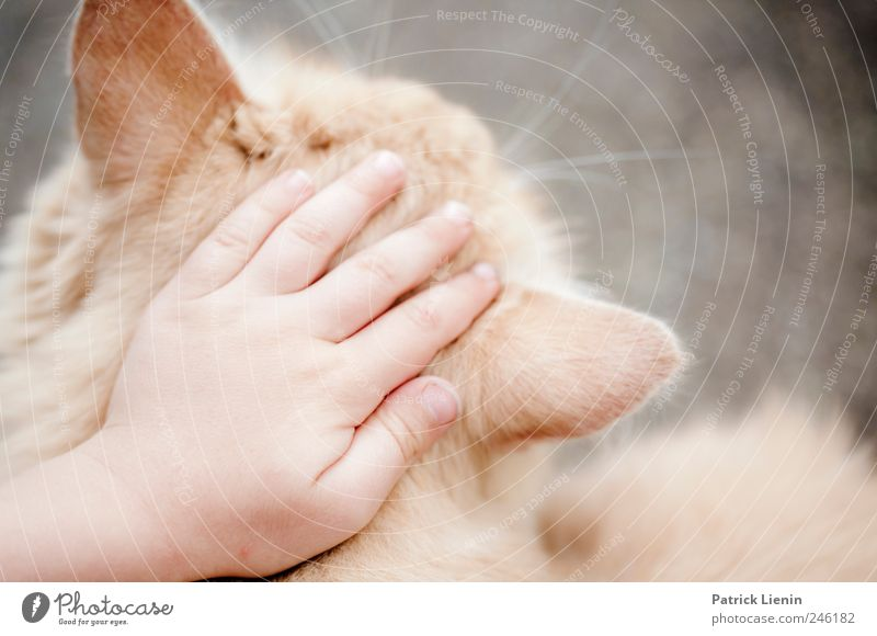 Human being Child Hand Cat Beautiful Animal Warmth Friendship Infancy Elegant Fingers Safety Uniqueness Soft Desire Team