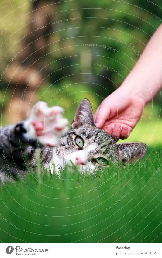 Child Nature Hand Calm Animal Relaxation Cat Grass Garden Park Feet Lie Fingers Ear Animal face Pelt