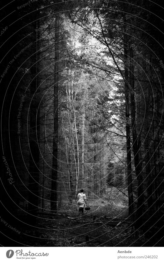 Human being Nature Vacation & Travel Dark Forest Environment Leisure and hobbies Hiking Creepy Collection Basket