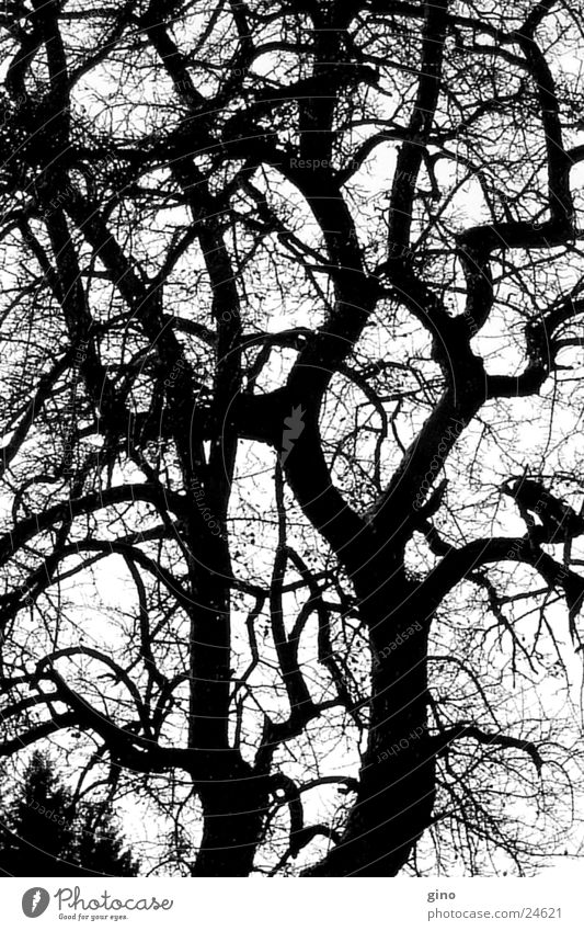 tree net Tree Autumn Branched Black & white photo Nature