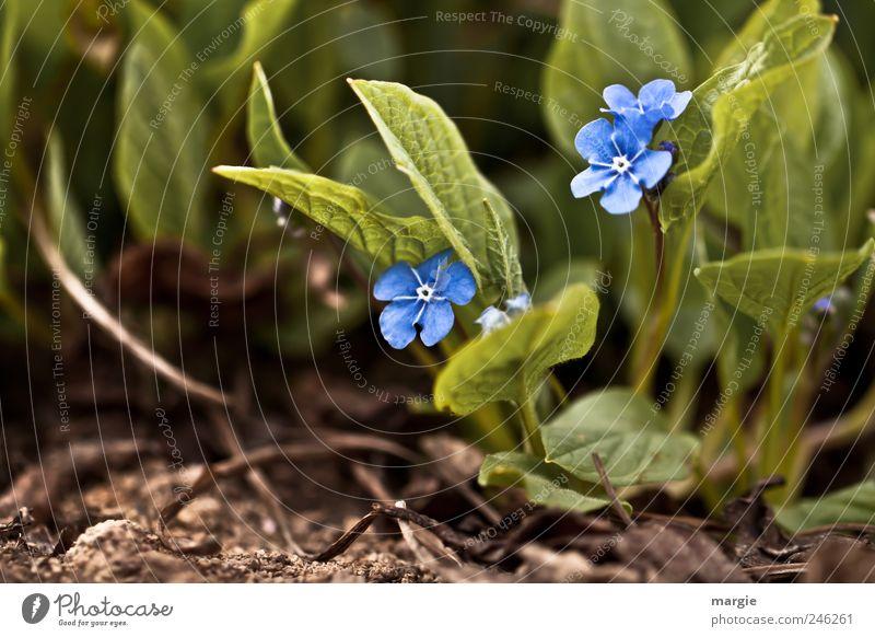 Nature Blue Green Beautiful Plant Summer Flower Leaf Animal Emotions Garden Blossom Spring Park Brown Together