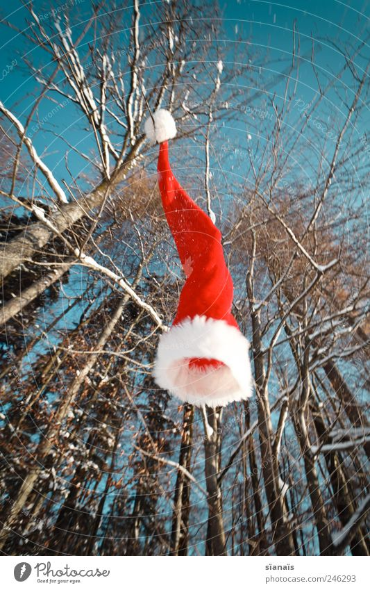Ho! Ho! Ho! Environment Nature Plant Air Sky Cloudless sky Beautiful weather Wind Forest Cap To fall Flying Happiness Santa Claus hat Christmas & Advent