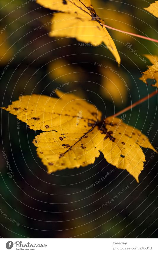 Nature Tree Plant Leaf Yellow Autumn Death Environment Garden Park Weather Wet Large Growth Climate Broken