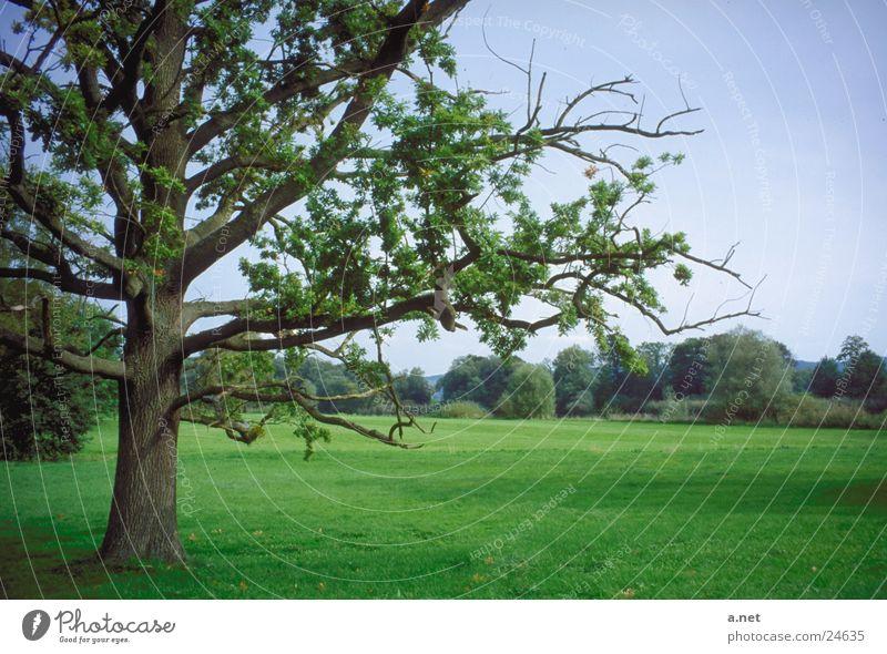 Park of Lenné Lower Oder Tree Lenné Landscape Park Castle Criewen ore fold State of Brandenburg