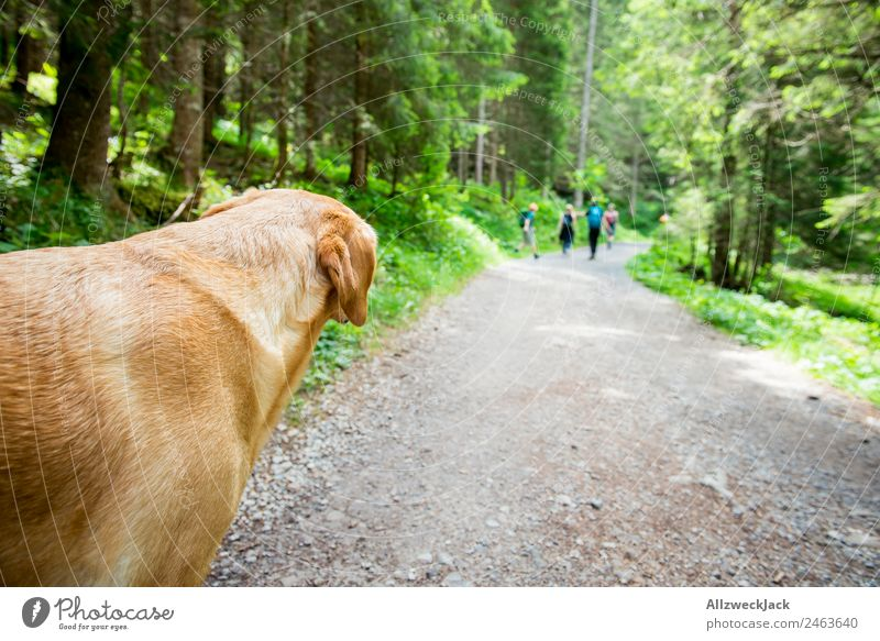 Dog looks after group of people on hike daylight Beautiful weather Nature Green trees Forest mountains Idyll vacation Travel photography Hiking backpacking
