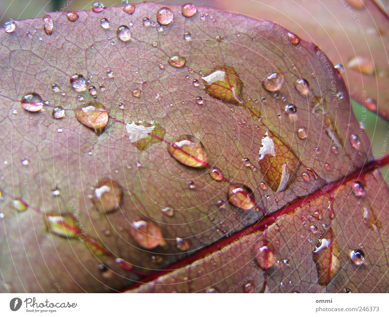 Nature Water Plant Leaf Glittering Wet Drops of water Fresh Natural Rachis
