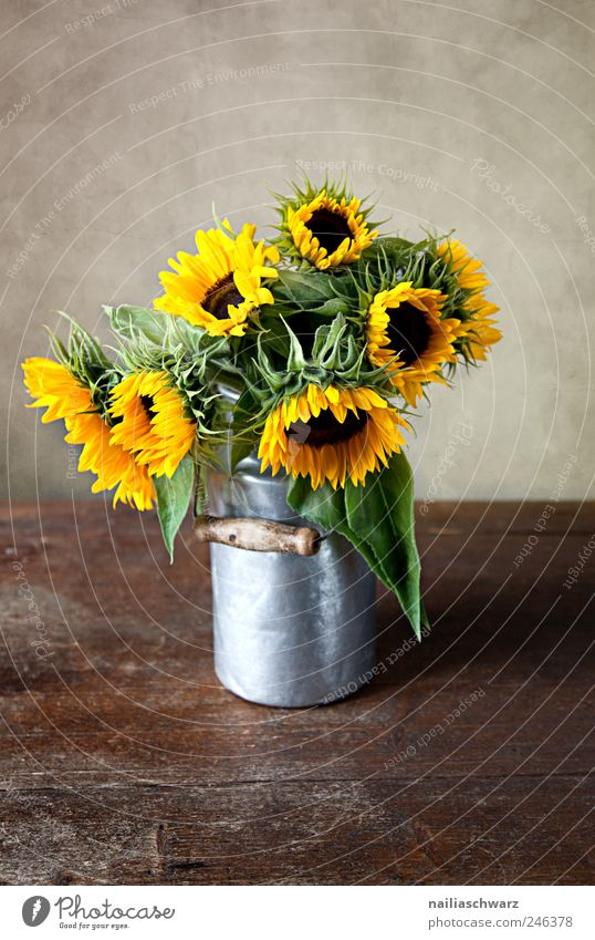 sunflowers Plant Flower Sunflower Bouquet Milk churn tin can Wood Metal Blossoming Esthetic Brown Yellow Gold Silver Colour Idyll Colour photo Interior shot