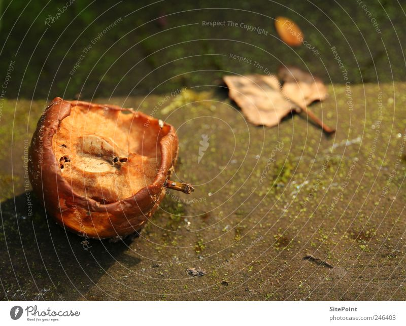 overripe Food Fruit Apple Nutrition Summer Garden Nature Sunrise Sunset Leaf Old To feed To dry up Dry Death Decline Eroded Putrefy Evening sun Colour photo