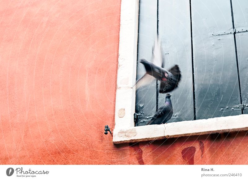 Loneliness Animal Wall (building) Window Wall (barrier) Going Sit Flying Goodbye Pigeon
