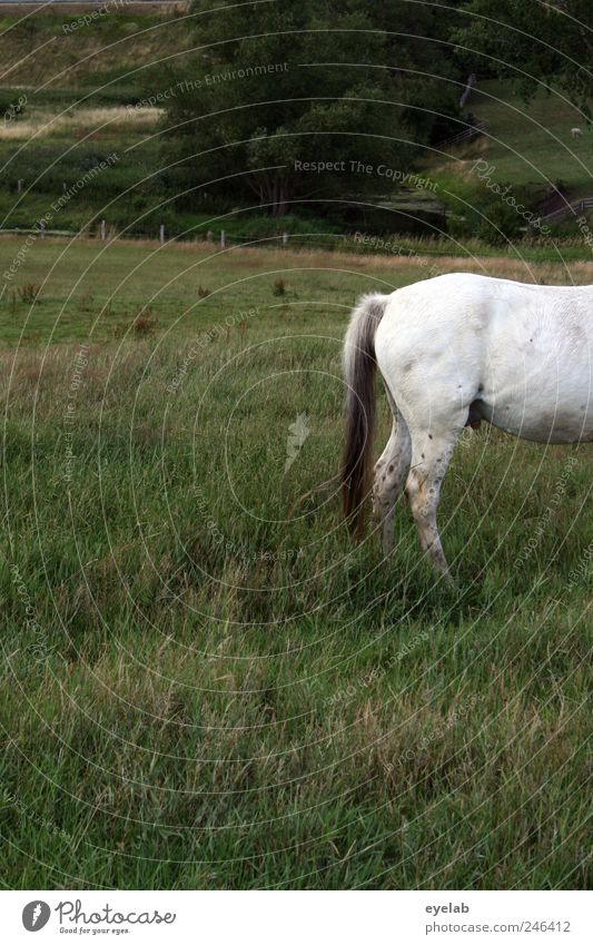 Nature White Tree Green Plant Summer Animal Meadow Grass Landscape Gray Environment Weather Leisure and hobbies Horse Bushes