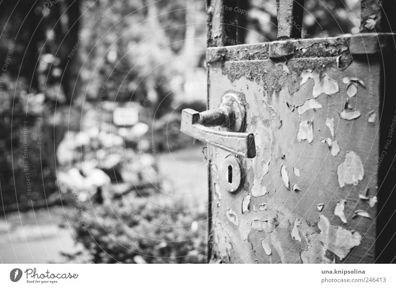 Nature Old Metal Park Door Dirty Transience End Derelict Creepy Gate Rust Door handle Sharp-edged Cemetery