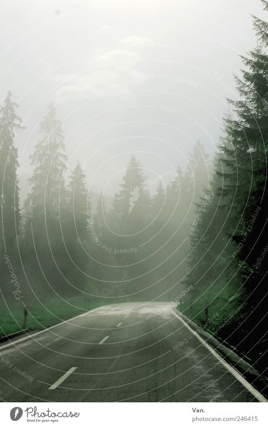 through the fog Trip Hiking Sky Clouds Fog Plant Tree Spruce Fir tree Forest Alps Mountain Street Walking Cold Wet Blue Gray Green Bavaria Colour photo