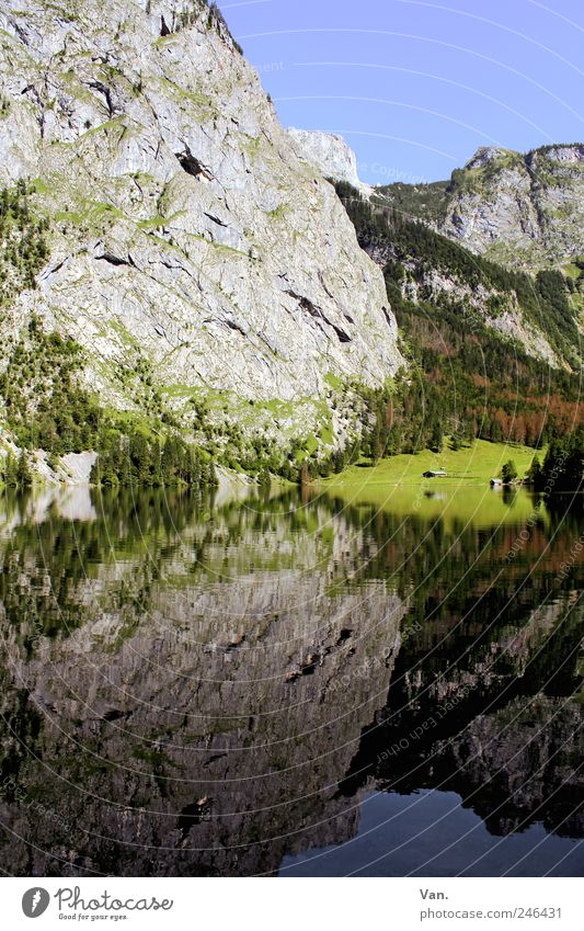 Mirror, mirror... Relaxation Calm Trip Freedom Summer Mountain Hiking Nature Landscape Plant Cloudless sky Tree Bushes Meadow Rock Alps Lake Lake Königssee Tall
