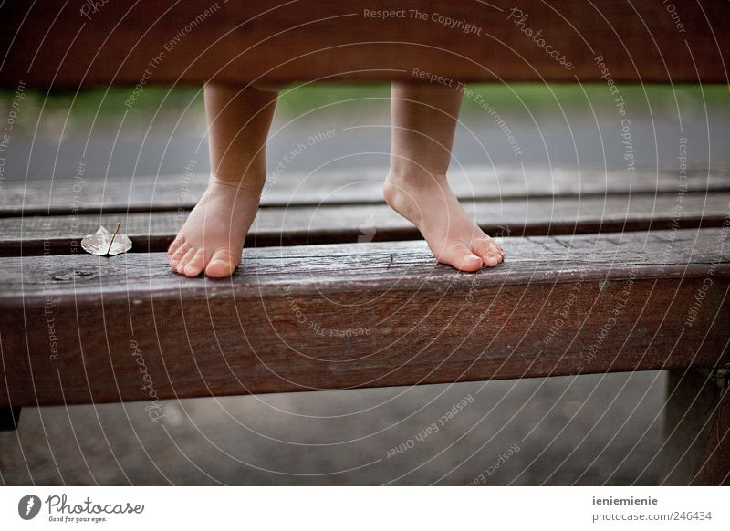 Human being Leaf Life Playing Wood Small Happy Legs Feet Park Infancy Baby Natural Tall Happiness Growth
