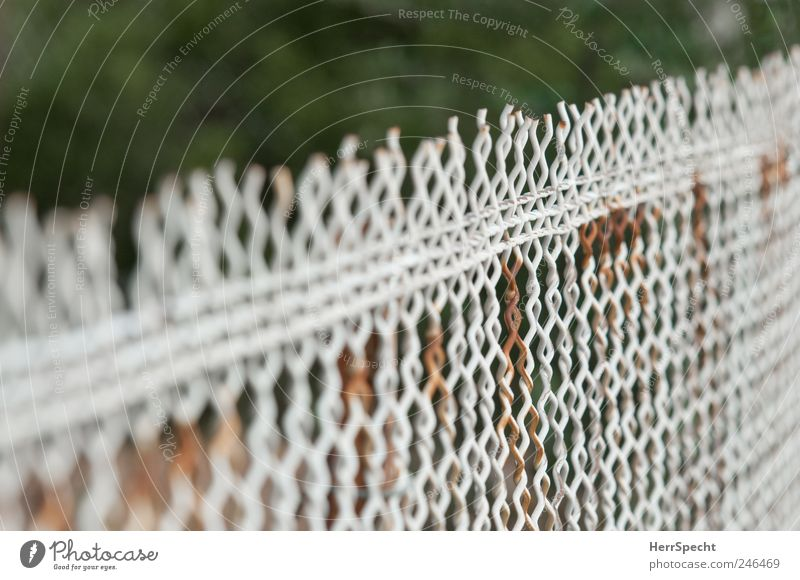 Old White Brown Rust Fence Wire netting fence Wire fence