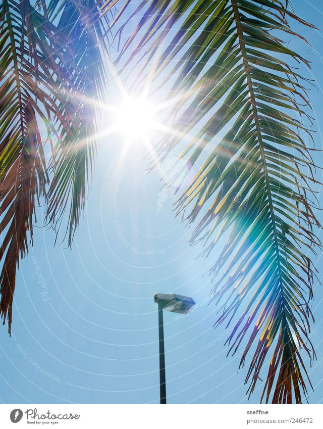holiday period Cloudless sky Sun Sunlight Summer Beautiful weather Tree Exotic Palm tree Palm frond Hot Vacation & Travel Lantern Colour photo Exterior shot