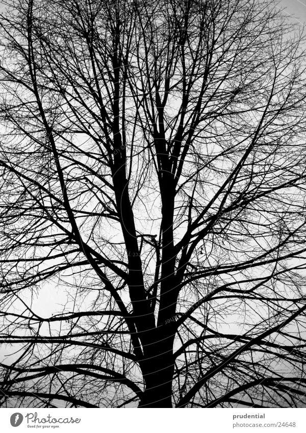 winter tree Tree Winter Black & white photo
