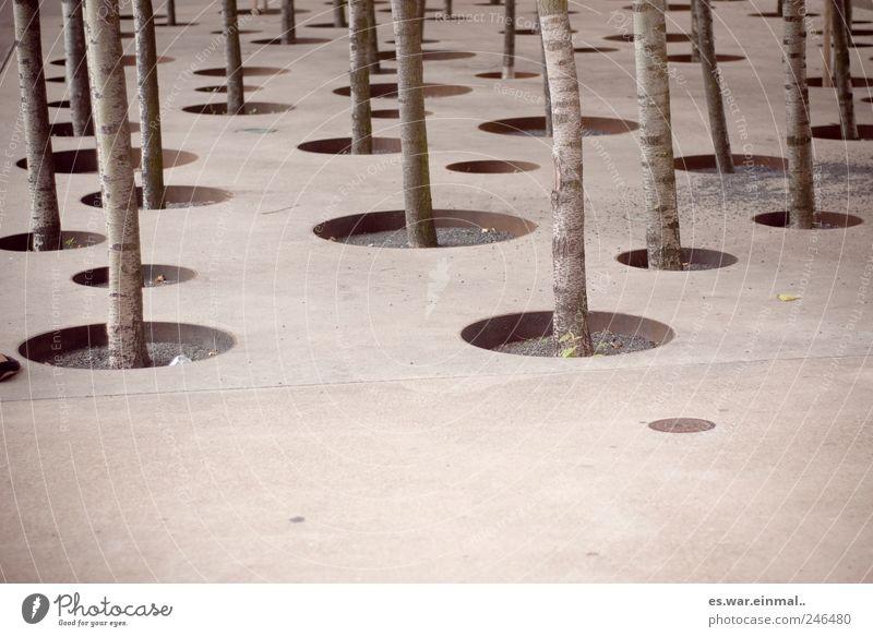 Tree Growth Circle Captured Graphic