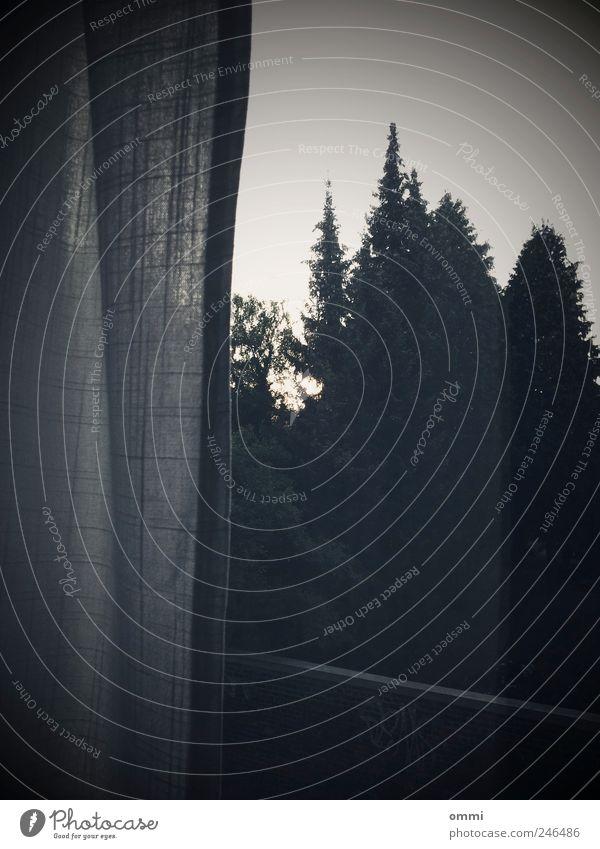 Tree Forest Dark Window Gloomy Living or residing Cloth Simple Drape Window pane