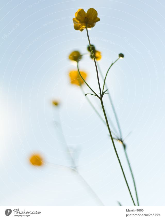 Nature Plant Yellow Freedom Blossom Bright Field Happiness Pride Beautiful weather Optimism Self-confident Modest