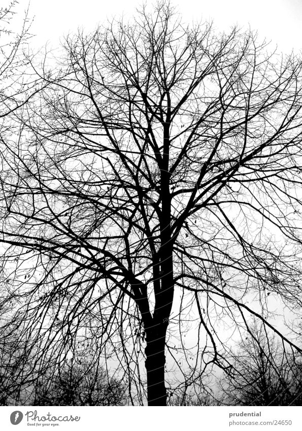 Tree Winter