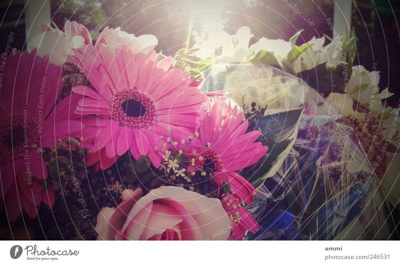Beautiful Flower Happy Bright Pink Elegant Happiness Romance Friendliness Bouquet Fragrance Beautiful weather Gerbera Lomography Flower arrangement