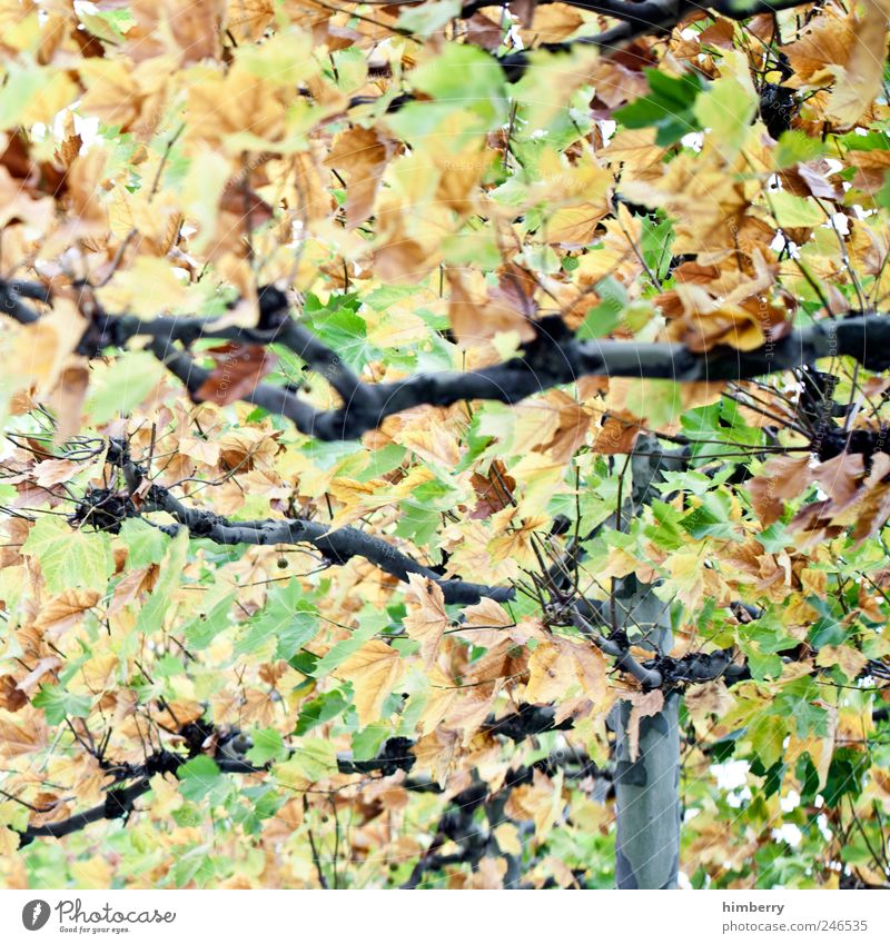 leaf salad Gardening Art Environment Nature Landscape Autumn Tree Leaf Park Forest Uniqueness Yellow Green Design Freedom Leisure and hobbies Contentment Idea