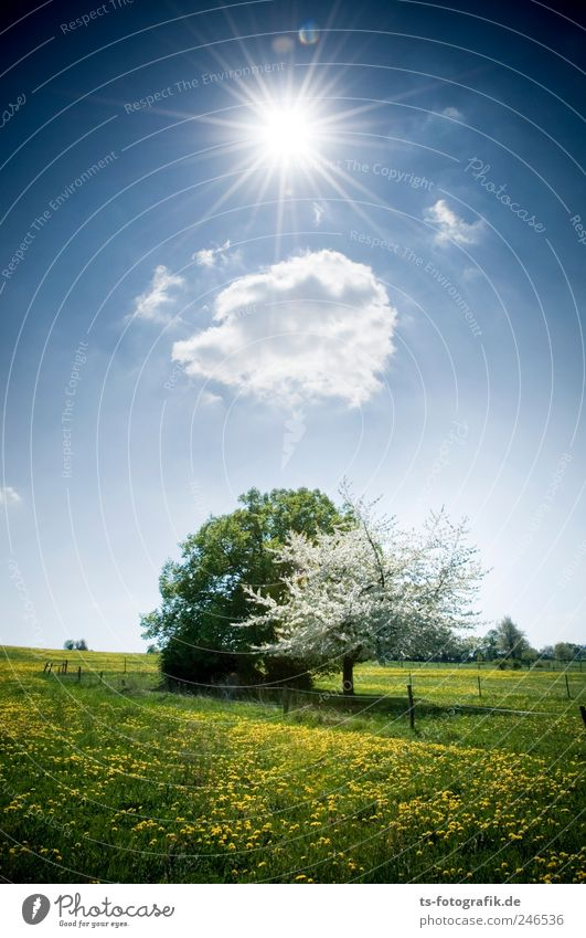 Sky Nature Tree Green Beautiful Blue Clouds Meadow Landscape Blossom Grass Spring Environment Air Elements Pasture