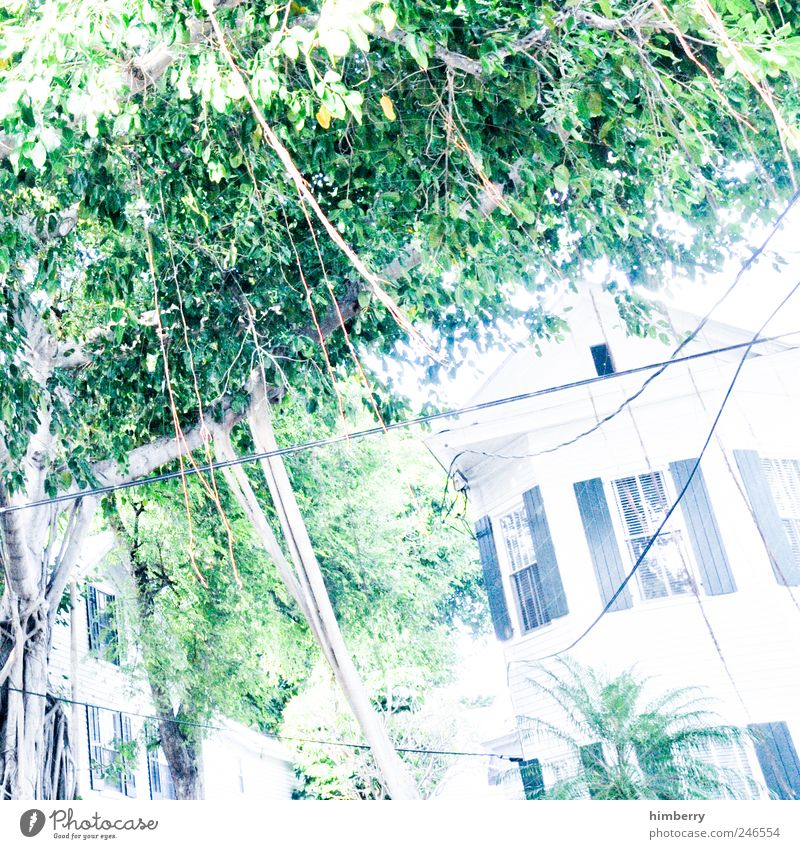 crime scene irene Environment Nature Tree Garden Park House (Residential Structure) Detached house Dream house Manmade structures Building Facade Window Roof