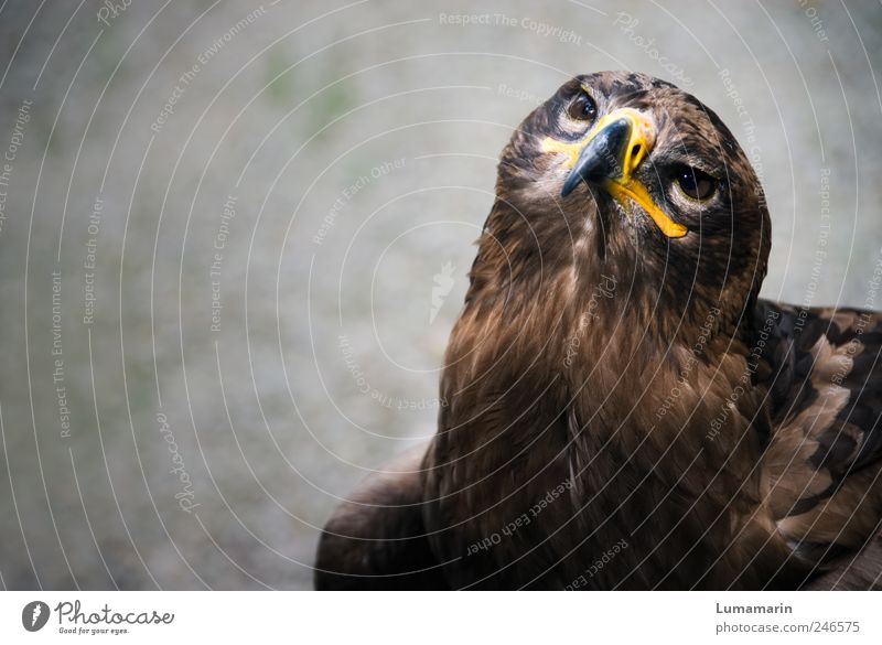 breakup Environment Animal Wild animal Bird Animal face 1 Observe Looking Sit Wait Esthetic Free Large Near Beautiful Strong Moody Power Willpower Brave