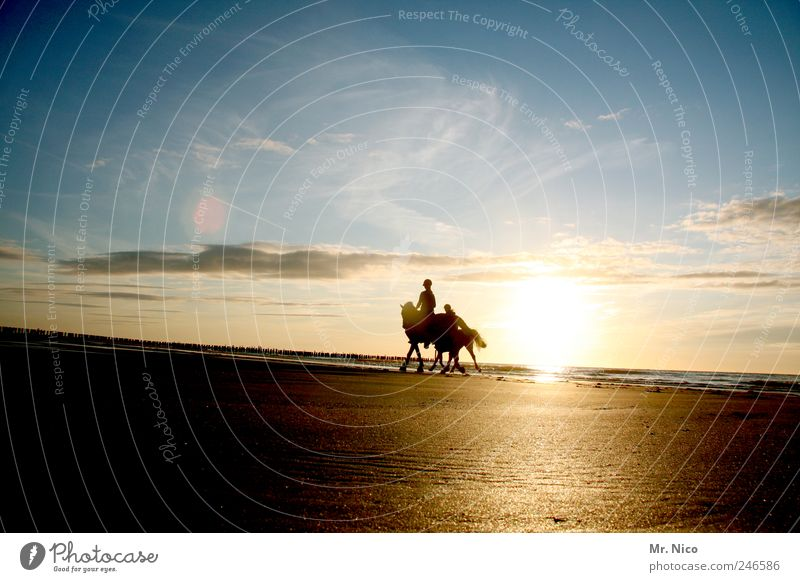 Sky Nature Sun Summer Beach Ocean Vacation & Travel Clouds Freedom Landscape Happy Environment Coast Trip Adventure Horse