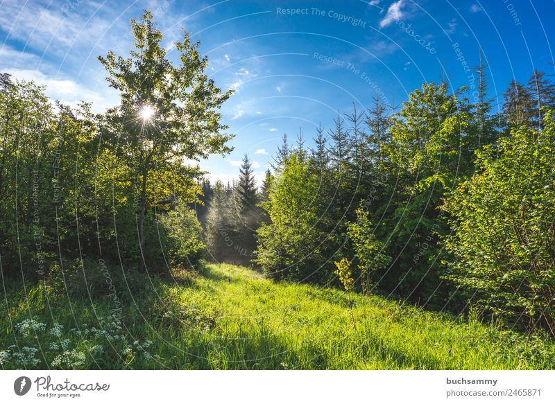 Sun in the forest Vacation & Travel Tourism Summer vacation Hiking Environment Nature Landscape Sky Clouds Sunlight Beautiful weather Tree Grass Forest Mountain