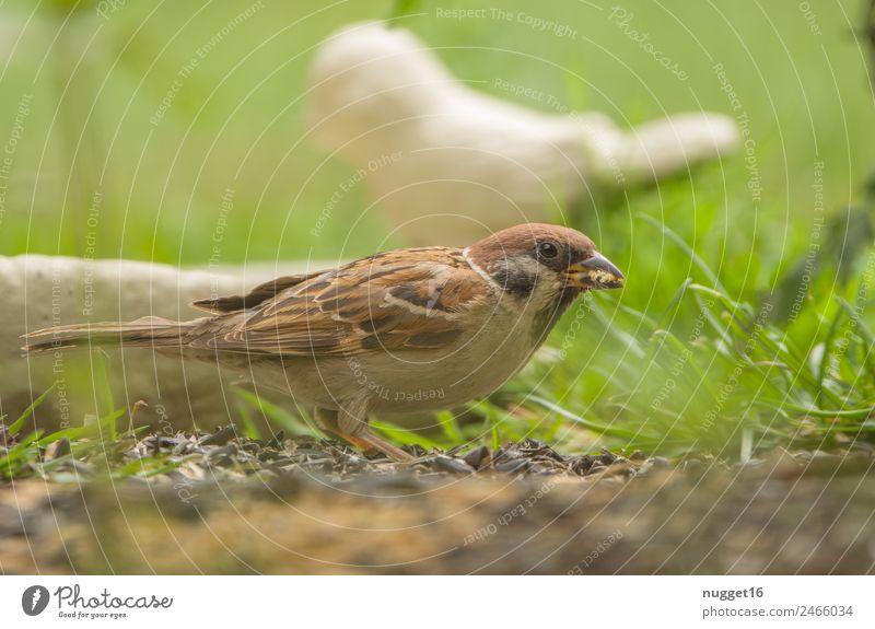sparrow Environment Nature Plant Animal Spring Summer Autumn Beautiful weather Grass Foliage plant Garden Park Meadow Field Forest Wild animal Bird Animal face
