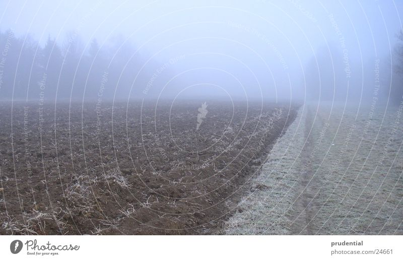 autumn impression Autumn Grief Sadness fog.grey Blue