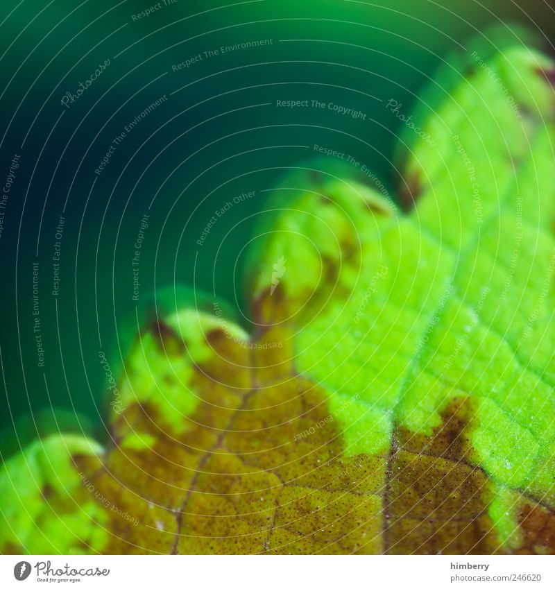 vital capacity Life Environment Nature Plant Leaf Foliage plant Environmental pollution Decline Transience Growth Colour photo Multicoloured Exterior shot