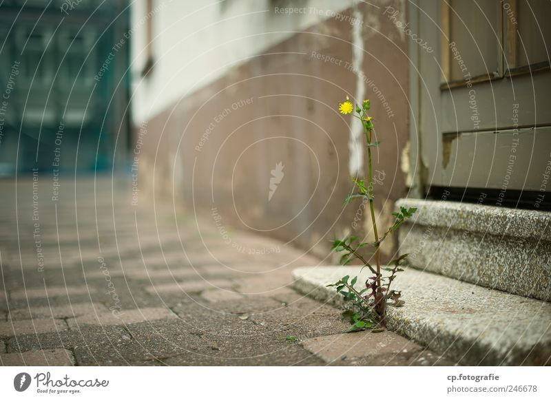 Plant Flower House (Residential Structure) Wall (building) Blossom Wall (barrier) Stairs Beautiful weather Bad weather Building Town