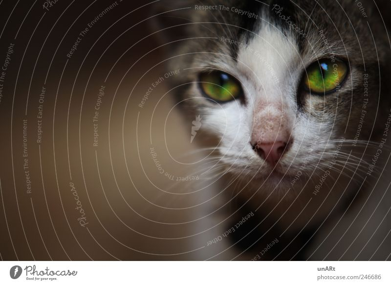 Calm Animal Cat Animal face Observe Pet Wanderlust