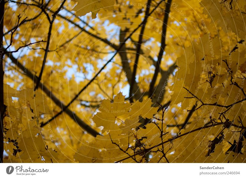 Nature Plant Tree Relaxation Leaf Calm Black Environment Yellow Autumn Park Leisure and hobbies Elegant Esthetic Tall Outskirts