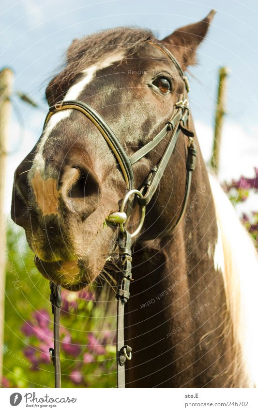 Nature Beautiful Vacation & Travel Plant Animal Environment Landscape Power Leisure and hobbies Elegant Horse Observe Curiosity Pelt Animal face To feed